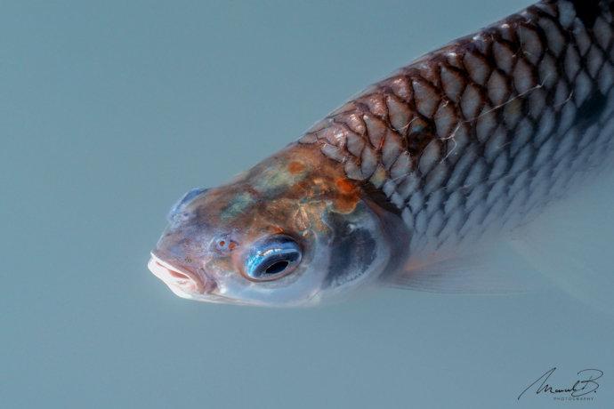 eaudesuisse fisch