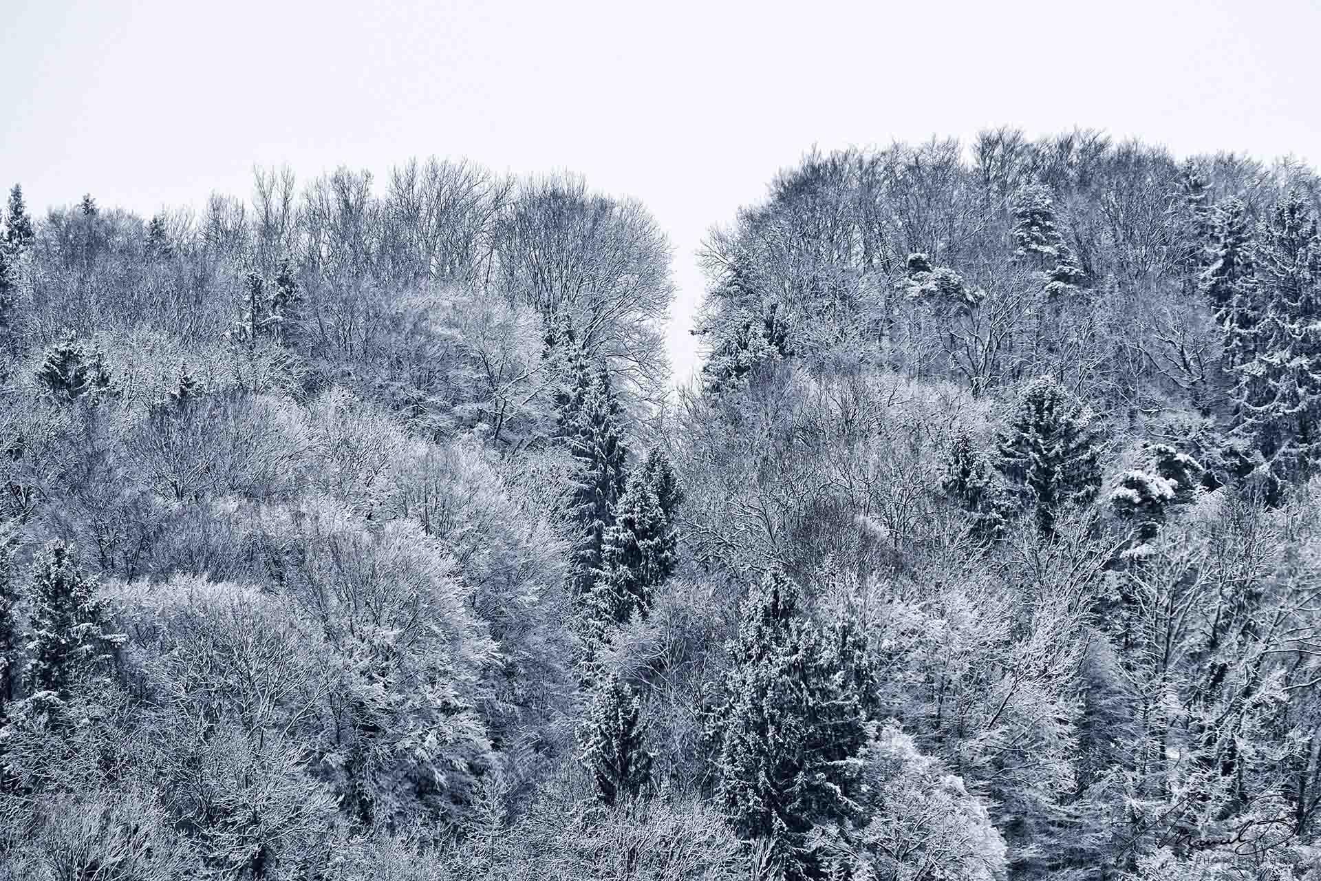 eaudesuisse waldschneise im schnee oberwil