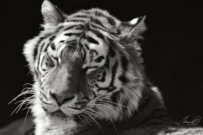 eaudesuisse tiger augen zu sw
