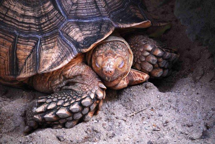 eaudesuisse mixed schildkröte augen zu thailand