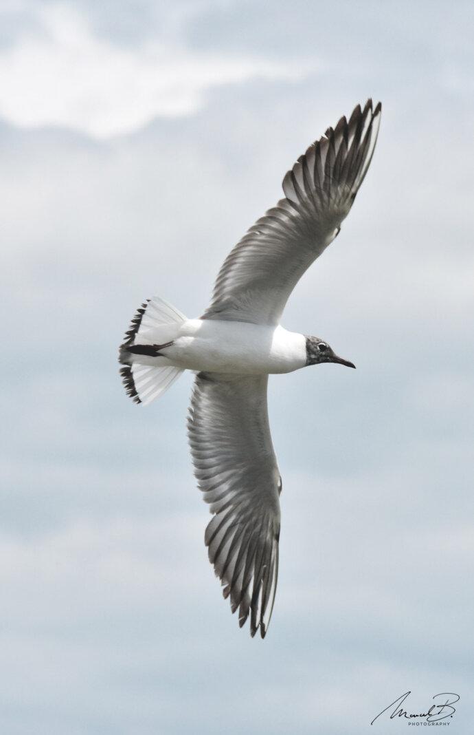eaudesuisse vögel möve ausgespannt flug