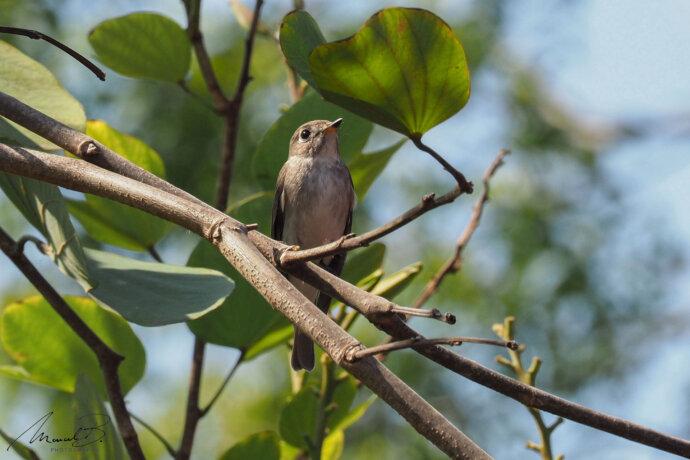 eaudesuisse vögel thailand vogel auf ast