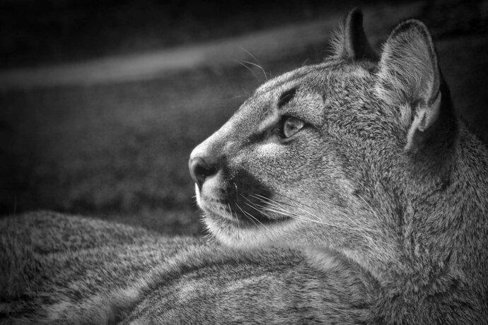 eaudesuisse wunderbare tierwelt sw löwin aufschauend